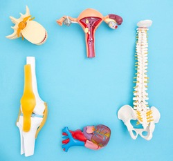 Human organs layouts on a blue background. The concept of disorders of body functions in psychosomatics. Treatment of human organs, copy space for text, health