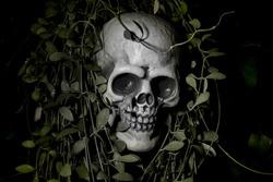 Human plastic skull on a black background