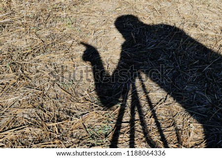 human shadow, the shadow of a photographer, The shadow of a photographer taking pictures,  #1188064336