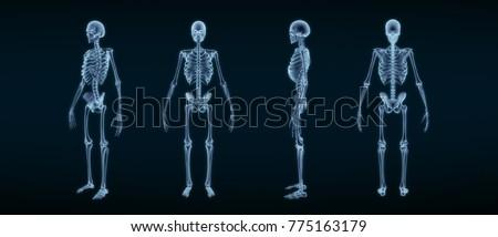 Human Skeleton Anatomy X-ray 3D rendering