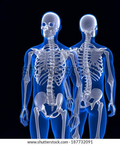 Human skeleton close up. Front and back view. Contains clipping path ...