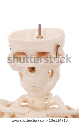Human skeleton in details isolated on white