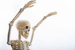 Human skeleton model  for medical anatomy science Medical clinic concept.