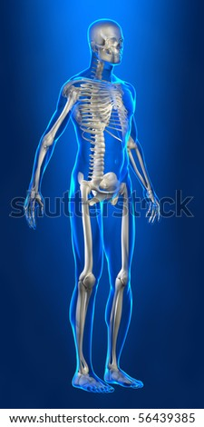 Human skeleton with x-ray body lines