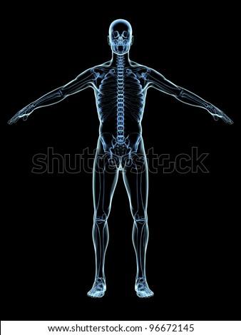 Human Skeleton Xray on black