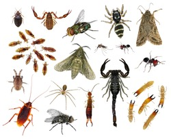 Human skin parasites and housing pests. Insects - parasites and pests isolated on white background