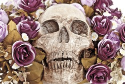 Human Skull among With the Roses