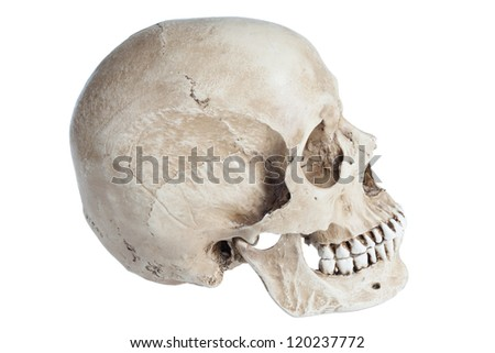 Human skull close-up isolated on white background