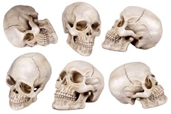 Human skull (cranium) set isolated on white background