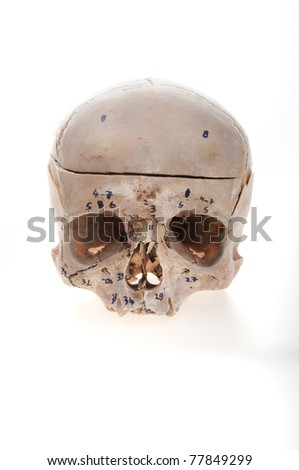 human skull from anatomy in studio