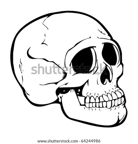 Human skull illustrator - stock photo