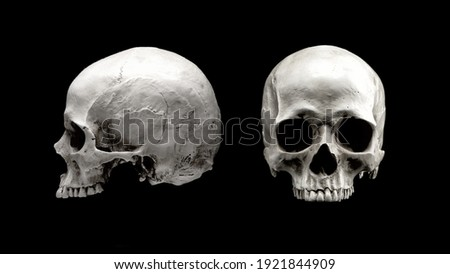 Human skull in different angles. Isolated on black background. Side and front views. Anatomy and medicine concept.