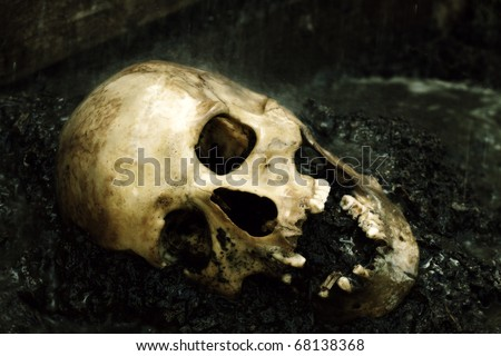 Human skull in rain configured as crime scene, color manipulated