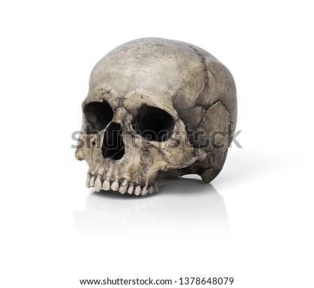 Human skull, isolated