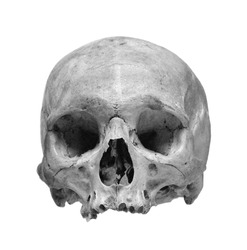 Human skull isolated on a white background. Black and white photo