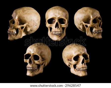 Human Skull isolated on black background. Many different angle views