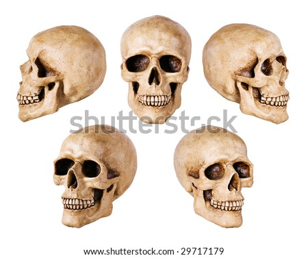 Human Skull isolated on white background. Many different angle views