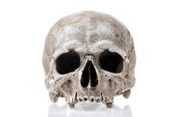 Human skull isolated on white background with reflection