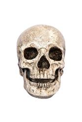 Human skull model, front view