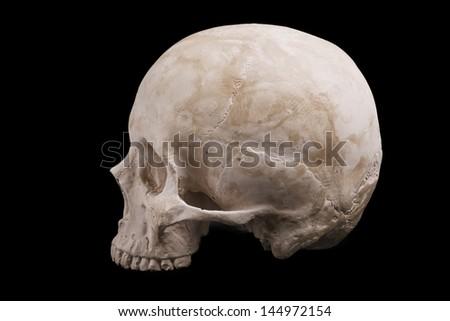human skull model isolated on black background