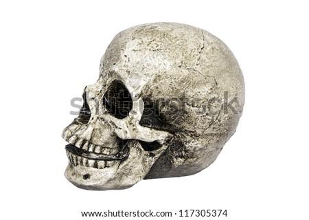 Human skull model, side view on white background