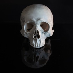 Human skull, no jaw. Halloween. On black glossy background with reflection. Gloomy concept free space