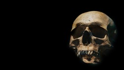 Human skull of a skeleton in bone remains. Evolution and specie concept against a black background. Empty copy space for Editor's text.