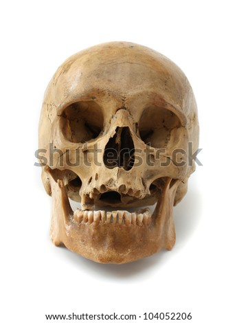 Human skull on a white background.