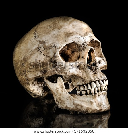 Human skull on isolate black background with reflection