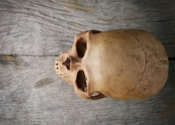 Human skull on wooden table with copy space - Vintage Filter