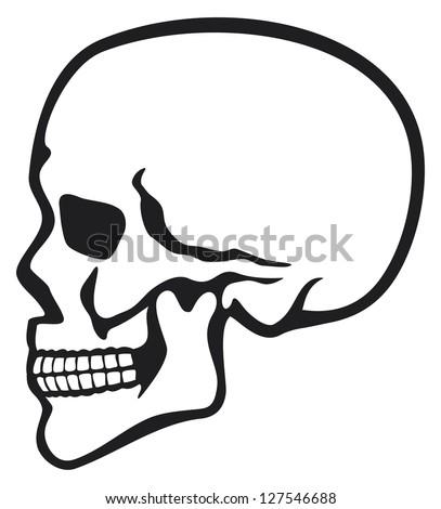 Human Skull Profile (Skull Profile, Side Skull) Stock ...