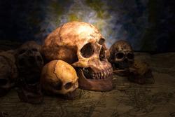 Human skull  , still life .