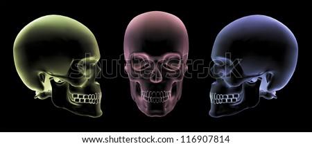 Human skulls in 3d x-ray