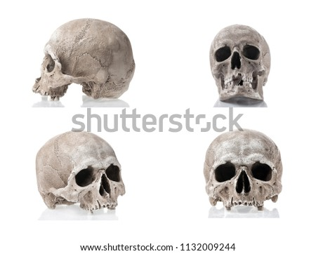 Side Profile View Of Human Skull Images And Stock Photos