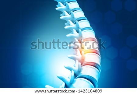 Human spine, vertebrae anatomy on science background. 3d illustration  Stock photo ©