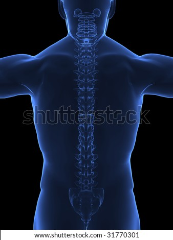 Human spine x ray back view