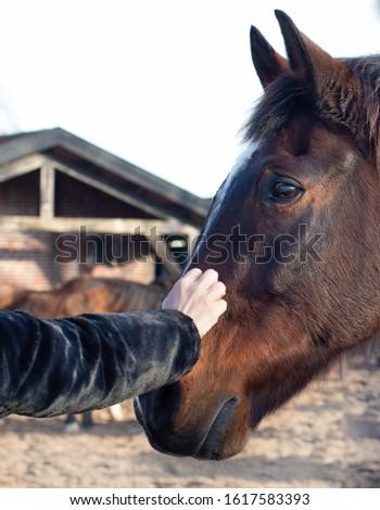 human stroking a brown horse