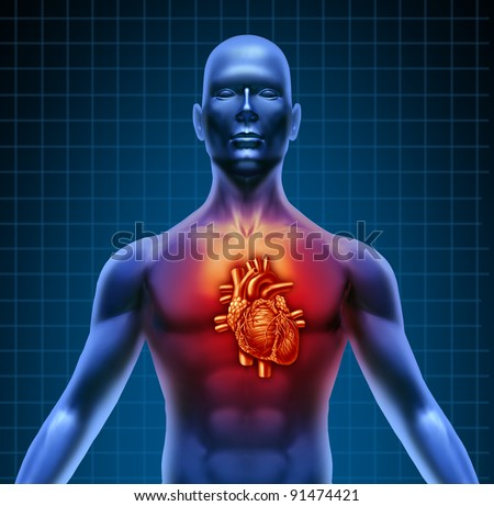 Human torso with red high lighted heart anatomy from a healthy body on a blue background as a medical health care symbol of an inner cardiovascular organ.