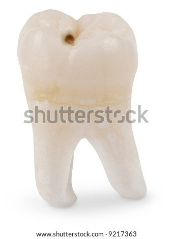 Human wisdom tooth isolated on white with a clipping path