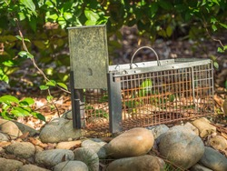 Humane live animal trap. Pest and rodent removal cage. Catch and release wildlife animal control service.