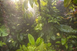 humid tropical rain forest with typical various plant species
