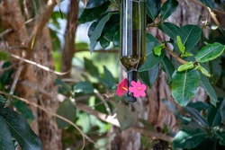 humming bird feeder handmade with recycled wine bottle
