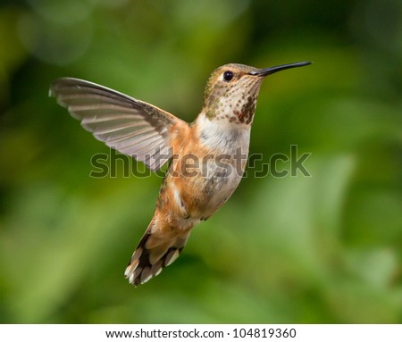 Humming flying with natural green background