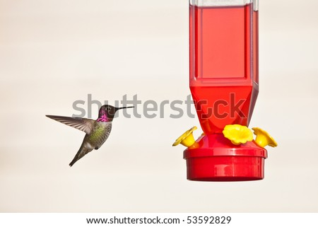 Hummingbird and feeder.  Anna's Hummingbird against light background