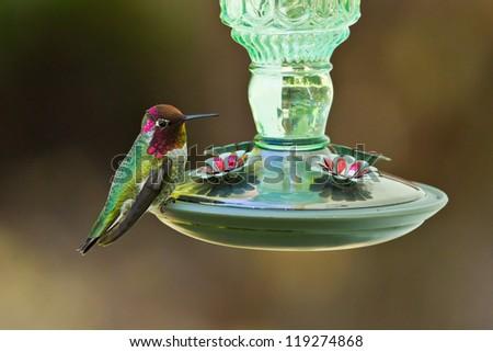 Hummingbird and feeder.  Side view of hummingbird's sitting on a bird feeder.