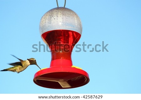 hummingbird drinking sugar water from a feeder against a clear blue sky