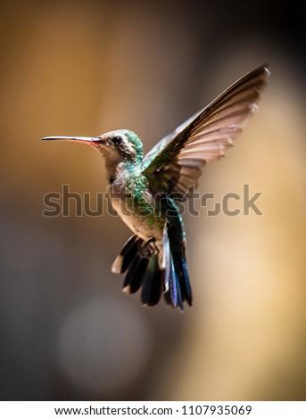 Hummingbird  green and blue  with the light of the sun.