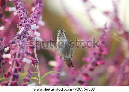Hummingbird in motion #730966339