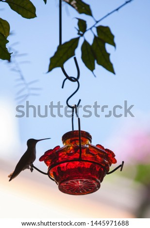 hummingbird perched on a red coloured feeder on a tree #1445971688