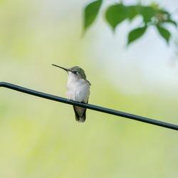 hummingbird perches in feeder pole